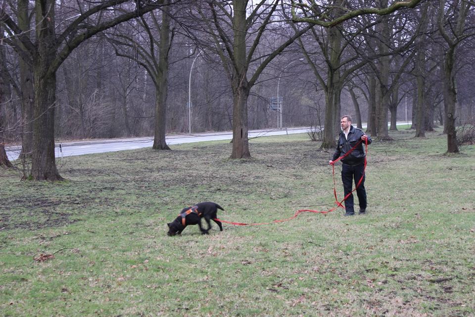 Diensthund Caja während eines Einsatzes