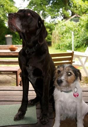 Balu und Merle