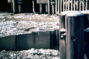 im-winter--treibeis-schwan-notlage-schwierige-rettung-eisbrecher