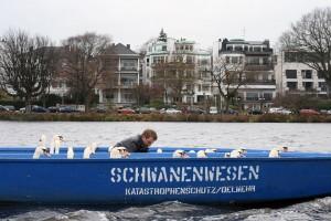 winterquartier-schwanenvater-behoerde-hamburg
