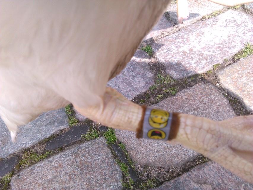 Moschusenten mit Smiley
