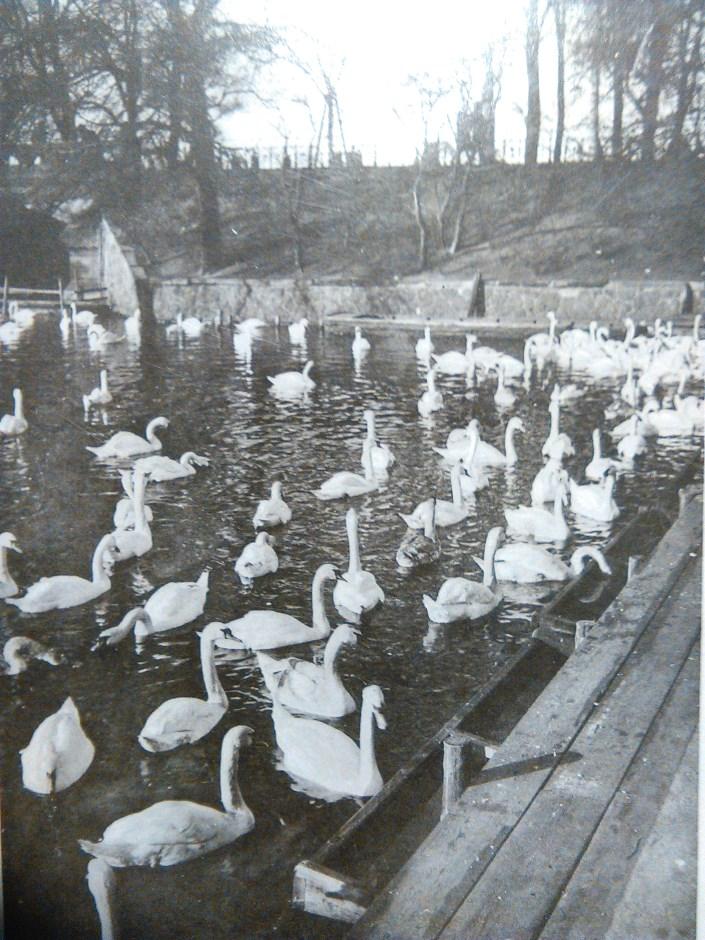 winterquartier-1930-schwanewik